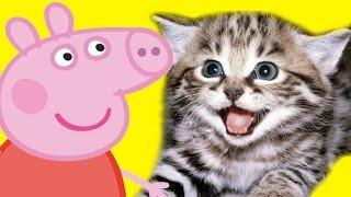 Мультфильмы для детей Свинка Пеппа. Котята и Истории игрушек. Новые мультики 2016 на русском.