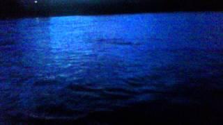 8th JUNE 2011 RIVER DEE COMMONTY 2LB SEA-TROUT