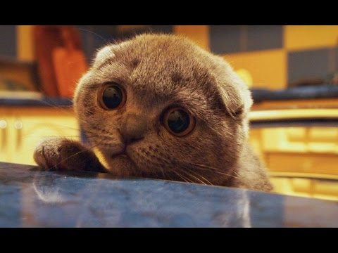 Smart cats - Funny cat, animal Compilation 2017