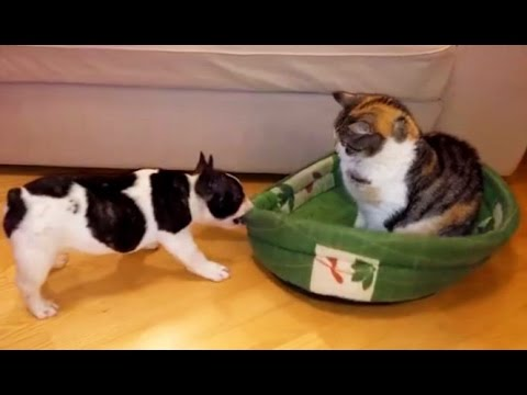 AFV Videos ► Funny Cute Dogs and Cats Compilation January 2016 ► F5 Media