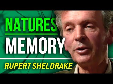 MORPHOGENETIC FIELDS - Rupert Sheldrake