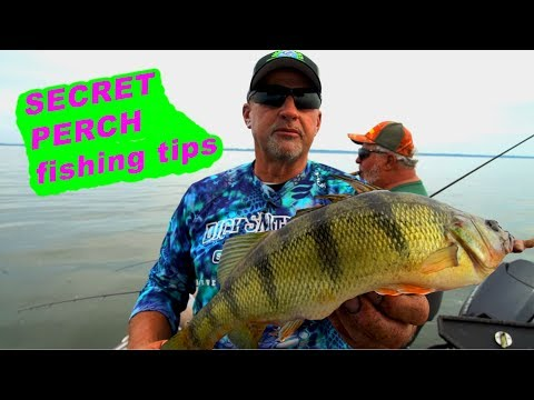 How To Catch Mid-Summer JUMBO PERCH!!!