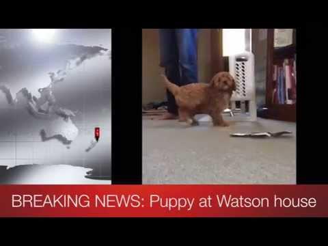 Watson Property Management - BREAKING NEWS!
