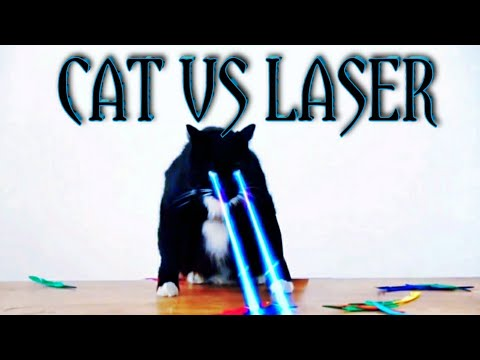 Cats vs Laser Pointers Compilation | New funny Videos 2020 | REACTING to CUTE CAT VIDEOS | mane tdh