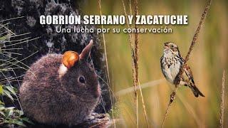 Gorrión Serrano y Zacatuche: Una lucha por su conservación