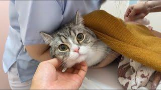 お散歩だと思ってついて行ったら病院だった猫の反応がこちらです…