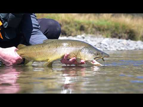 Fly Fishing New Zealand South Island Rivers