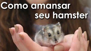 Como amansar seu hamster!