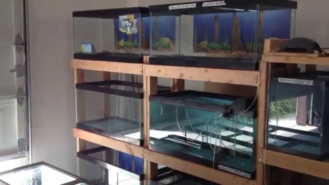 Set Up Fish Breeding Room
