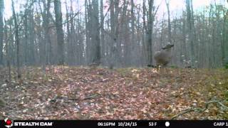 Buck Scrape 2