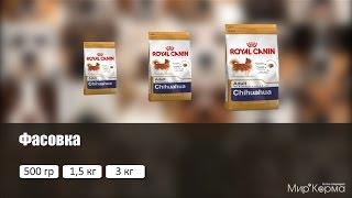 Обзор корма Royal Canin Chihuahua