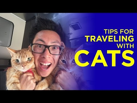 Tips For Traveling With Cats | #EndlessCaravan