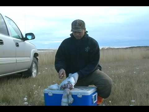 Bird Cleaning Method - Tips for Cleaning Ducks, Geese, Pheasant, etc.