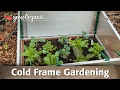What is Cold Frame Gardening?