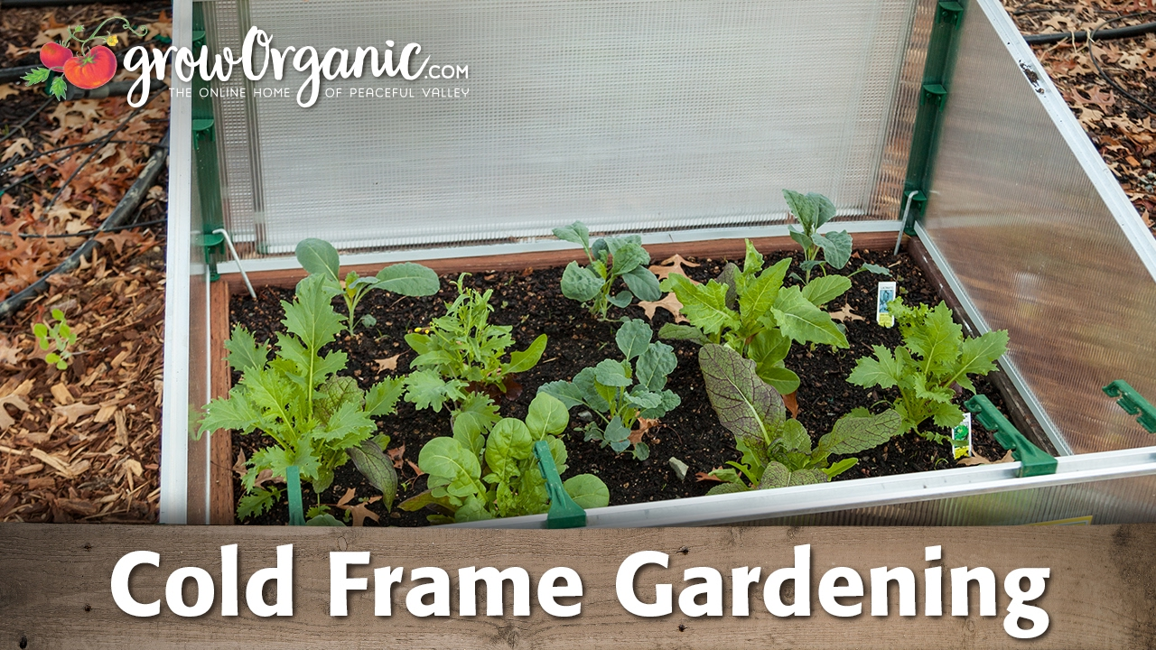 What is Cold Frame Gardening? - YouTube