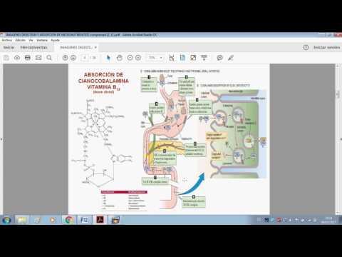 Absorción de Hierro, Vitamina B12 y Folato