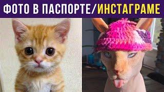 Приколы с котами. Фото в паспорте/инстаграме | Мемозг #321 видео