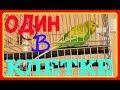 МИЛЫЙ И ЗАБАВНЫЙ ПОПУГАЙ ПОЕТ И ЧИРИКАЕТ ОДИН В КЛЕТКЕ зеленый попугайчик TV mp3