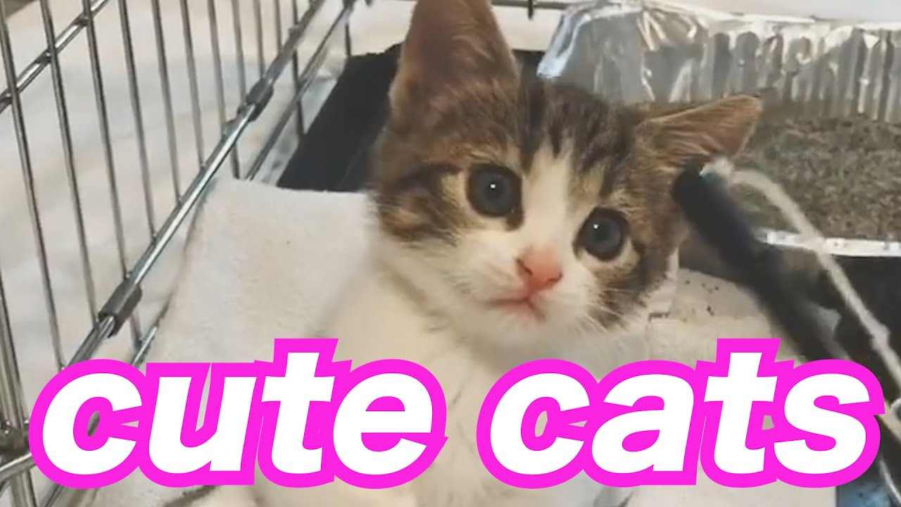 【Cutest】cute and funny cats Compilation #8