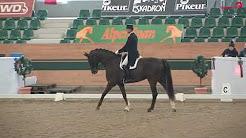 2019 Pferdesportverband Österreich