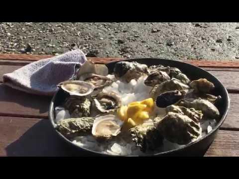 Best Oyster Farm (Taylor Shellfish Farms)