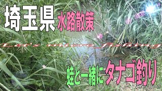 #59 増水した水路でタナゴ釣り【小物釣り_micro fishing channel_微物釣遊】