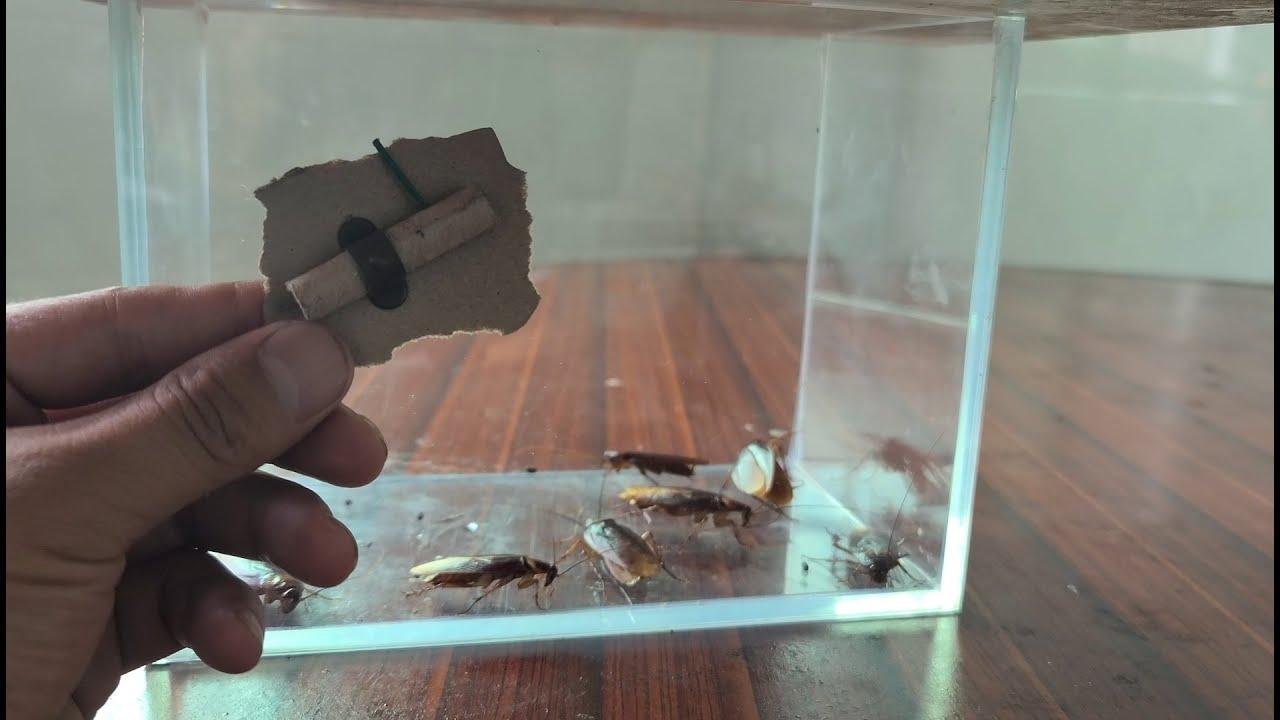 用烟花消灭蟑螂,真是太解气了,蟑螂集体灭亡,看着真过瘾