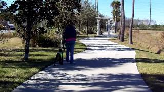 Doberman Puppy Maverick Skinner Leash Training
