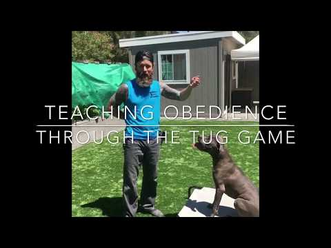 Teaching Your Dog the Out Command and Fetch With Tug