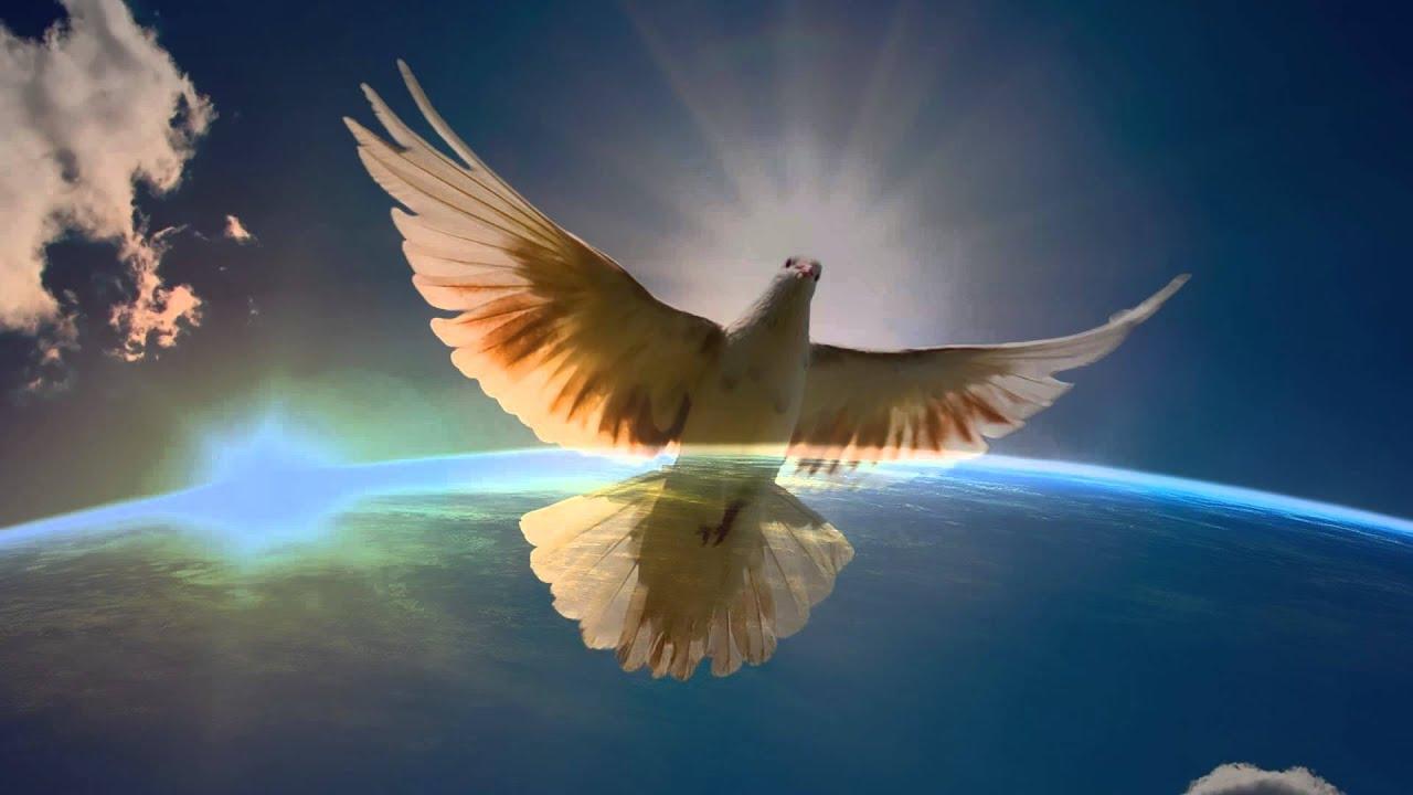 COMIGO Paz Mundial