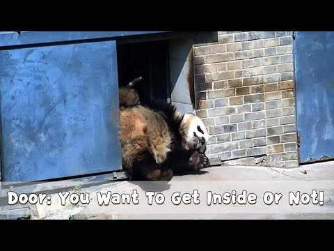 Door: You Want To Get Inside Or Not!   iPanda