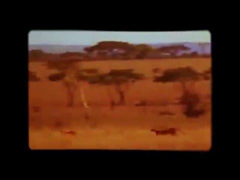 Цитаты про гепарда и самку » Свежие анекдоты, приколы и