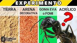 EXPERIMENTO con HORMIGAS Qu Suelo Les Gusta Ms? | Las Hormigas de Mike