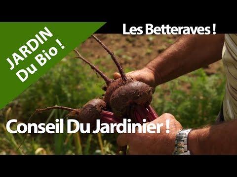jardin.betteraves.conseil-nature-et-culture.legumes.fruits.bio.france