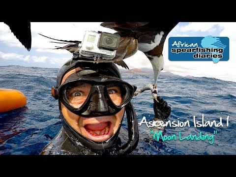 Spearfishing Ascension Island -