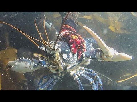 Fabriquer un casier pour p cher du homard araign e de doovi - Comment pecher dans un port ...