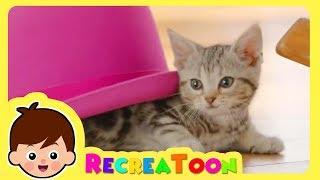 Animaux drôles #2   vidéos pour les enfants   Animaux pour bébé   animaux mignons