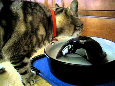 Dishes, Feeders & Fountains Petco Automatic Water Fountain For Cats
