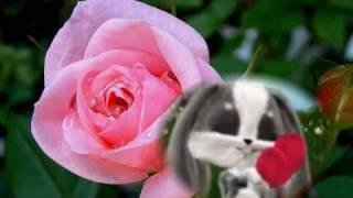 Bobi Czerwona róża mp3