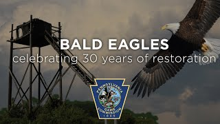 Pennsylvania Bald Eagles: Celebrating 30 Years of Restoration
