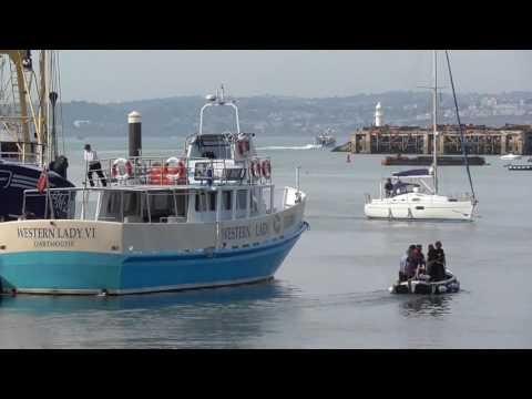 Brixham Harbour Dolphin Strandings 23/08/2016  - Video8 of 8