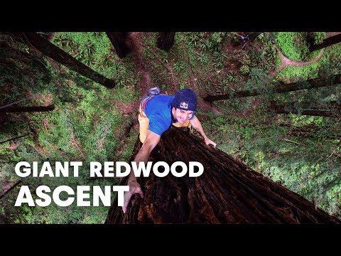 Giant Ascent: Chris Sharma Free Climbs Huge Redwood w/ Help of Scientists