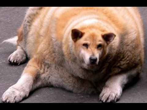 Funny Dogs Compilation Funny Dog Videos 2015 Try Not to ...
