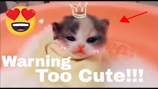 Funny cat videos Cute Cat and Kittens😂😂- Funny Cat Compilation😻😼