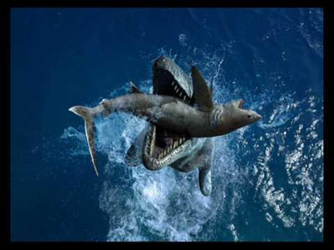 Tylosaurus vs Megalodon - YouTube