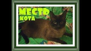 МЕСТЬ КОТА Видео про кошек Видео про котов СИАМСКИЙ ТАЙСКИЙ КОТ Сибирская кошка КОШКИ ВИДЕО