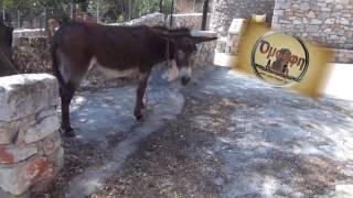 Πιόντες Μάνης: Ο Περήφανος Κίτσος του χωριού!