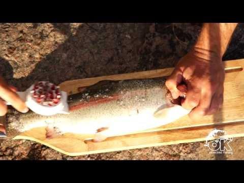 Fish Scaler, Sure Catch