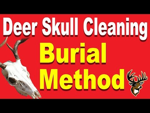 Deer Skull Cleaning for a European Mount - Burial Method