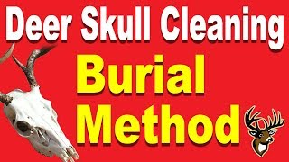 Deer Skull Cleaning for a European Mount - Burial Method
